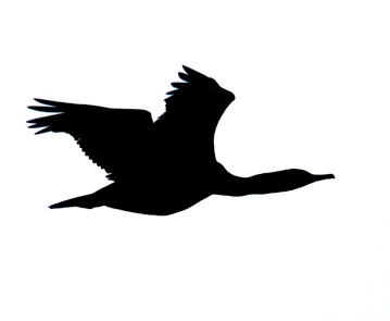 Flying loon silhouette